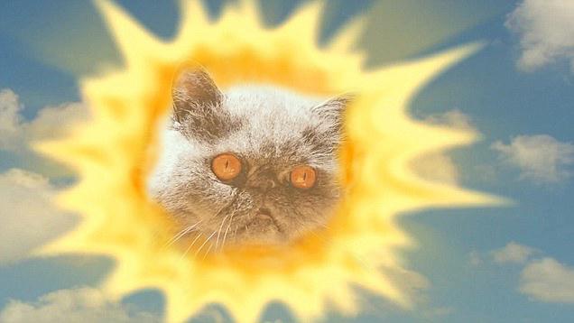 Eres el gato que ilumina mis días