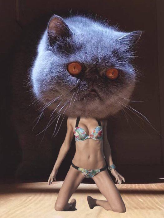 este gato es sexy y lo sabe