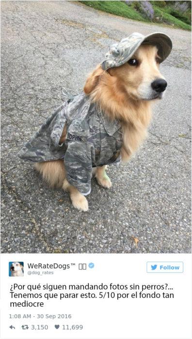 Y el perro ¿que culpa tiene?