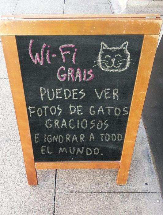 café + gatos = felicidad