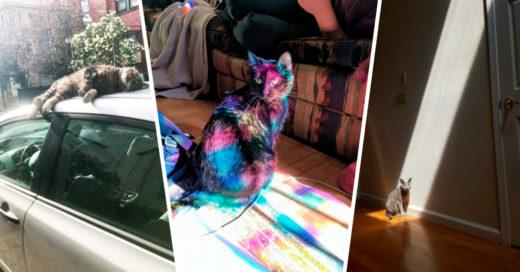 Cover Felices gatitos que aman con todo su corazón al señor Sol