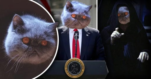 Cover Gato tenebroso se convierte en víctima de esta épica batalla de Photoshop