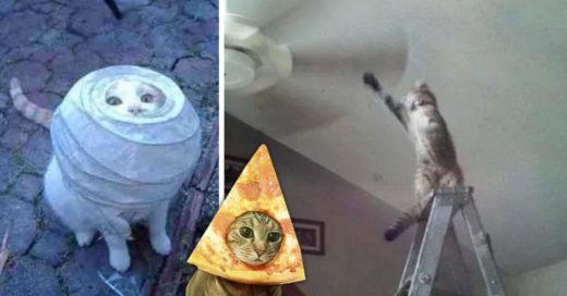 Cover Gatos que tomaron pésimas decisiones, como tú cuando volviste con tu ex