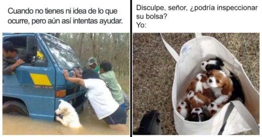 Cover Divertidos memes de perros que te harán sonreír