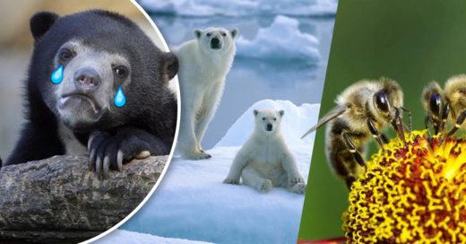 Cover Peligro de extinción: 5 especies que podrían desaparecer