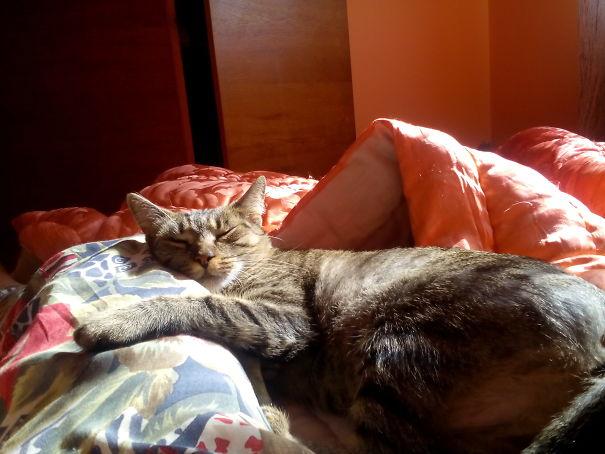 una rica siesta
