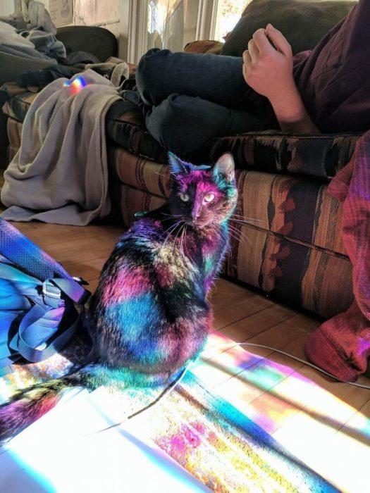 mi gato es mágico
