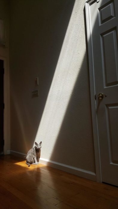 un rayito de sol
