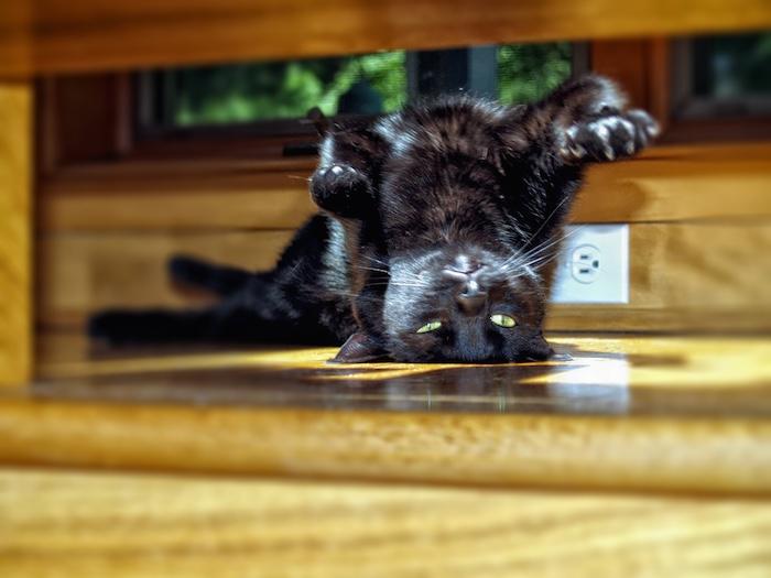 posición: gato invertido