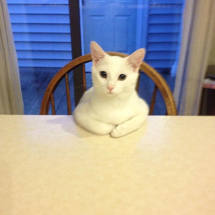 alguien está esperando su comida