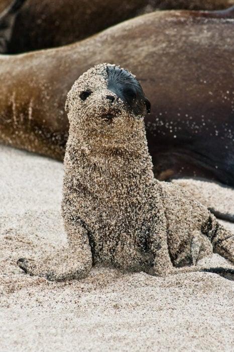 Pequeña foca llena de arena