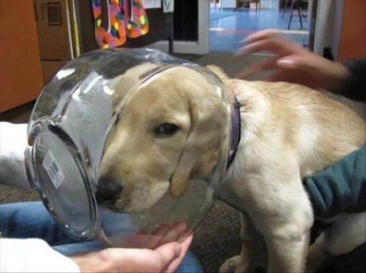 perro con la cabeza atorada dentro de pecera