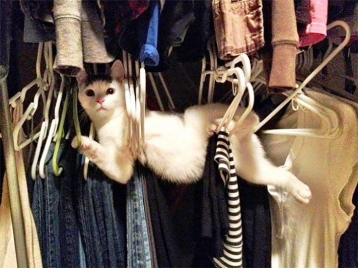 gato atorado en la ropa de un armario
