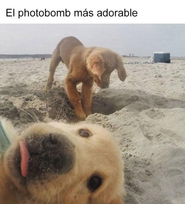 hey amigo, sonríe para la foto
