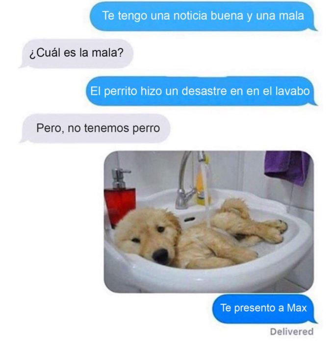 perro desastre mensajes sorpresa