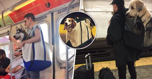 Cover Perritos viajando en metro de una manera muy original