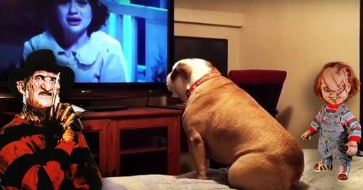 Cover Mira como esta bulldog reacciona al ver una película de terror