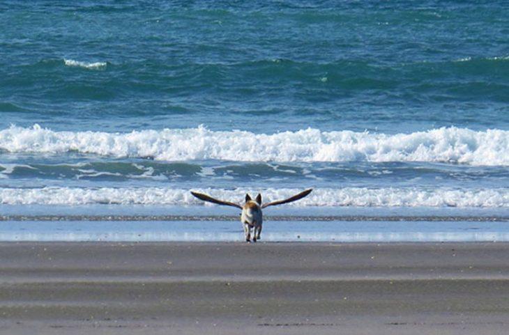 Perrito que parece tener alas por gaviota en la playa