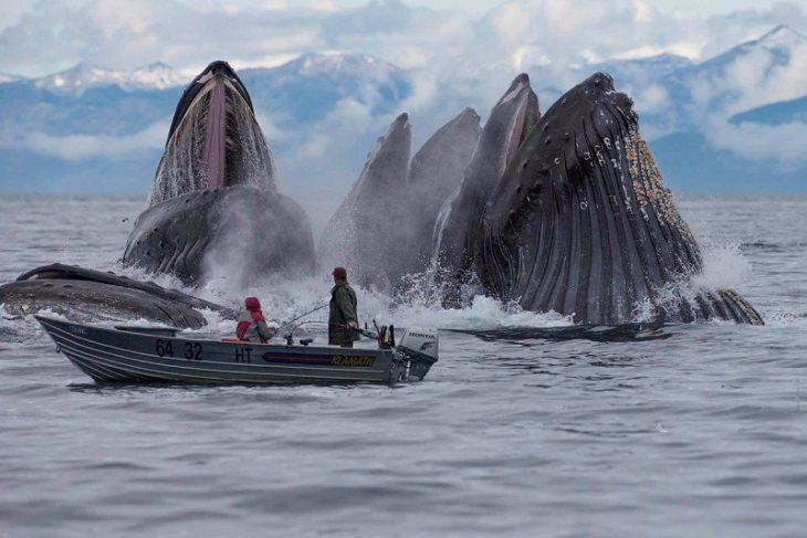 pescadores rodeados de ballenas grises