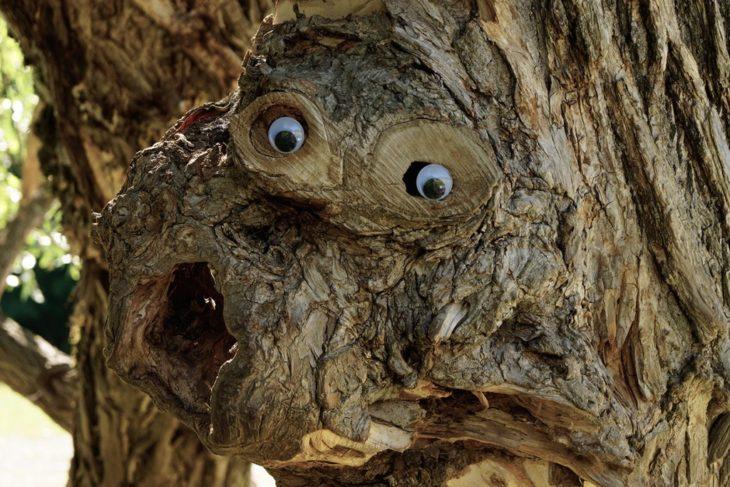 nudo de árbol con ojos locos