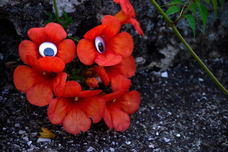 flores rojas con ojos locos