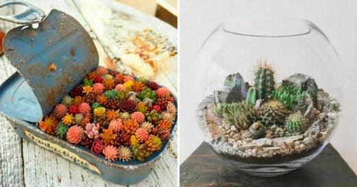 Cover Hermosos terrarios DIY que le darán un toque especial a tu hogar