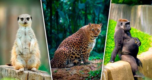Cover Hembras del reino animal a punto de ser madres