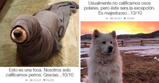 """Cover 20 Tiernas fotos """"Nosotros solo calificamos perros"""" que te harán morir de risa"""