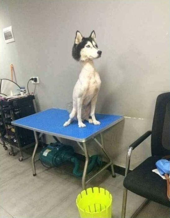 Perro con un nuevo corte