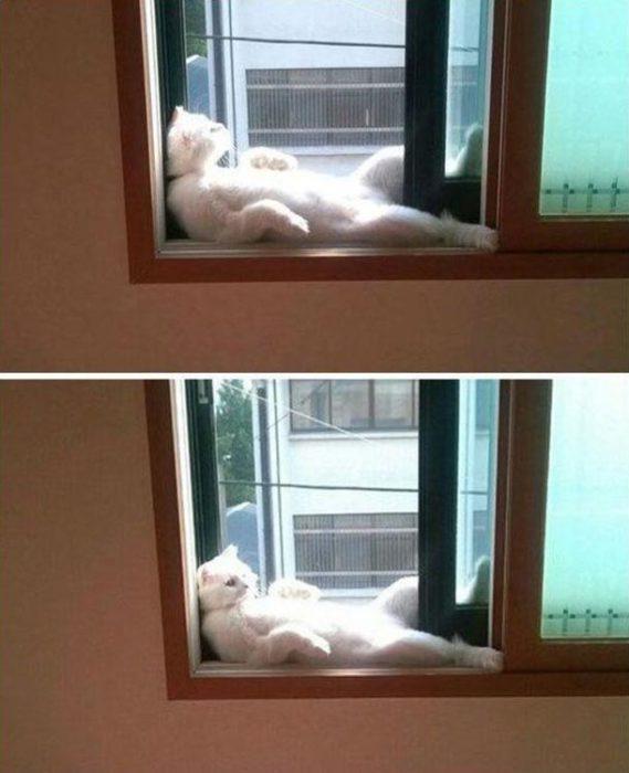 gato en pose sobre una ventana