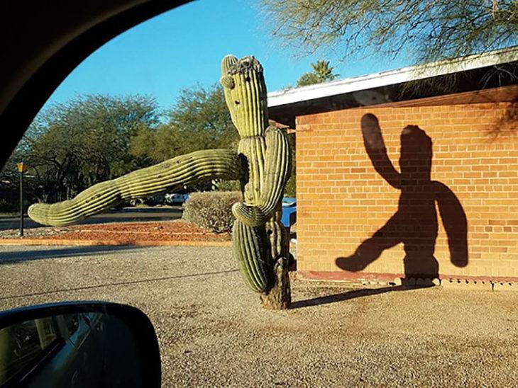 Extraño cactus proyecta sombra como si saludara
