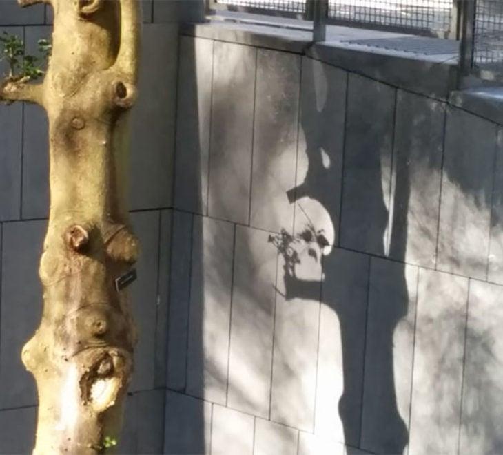 Ramas y hojas de un árbol forman un cráneo