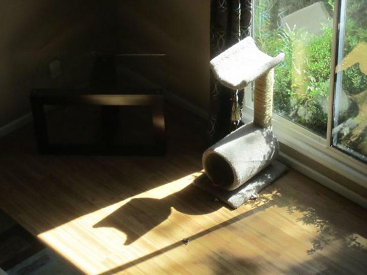 gimnasio para gatos simula sombra con forma de gato