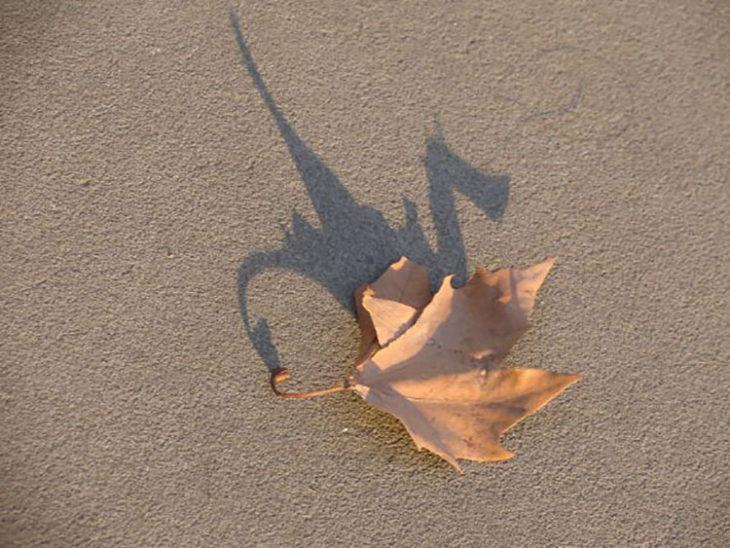 hoja tirada en el suelo que su sombra forma un dragón