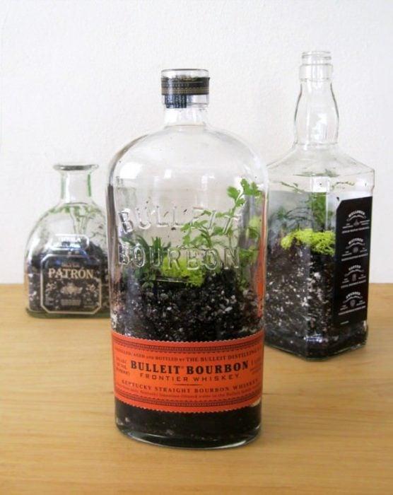 botellas vacías usadas para poner algunas plantas