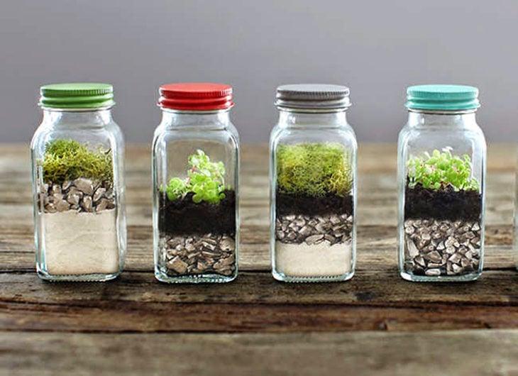 frascos usados para ser terrarios