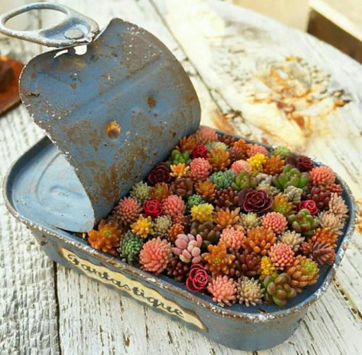 lata de sardinas usada para poder poner plantas y usarse de terrario