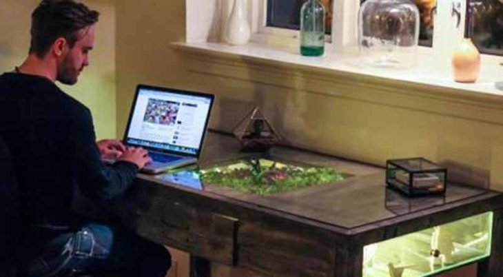 pequeño jardín dentro de un escritorio para hacer más ameno el trabajo