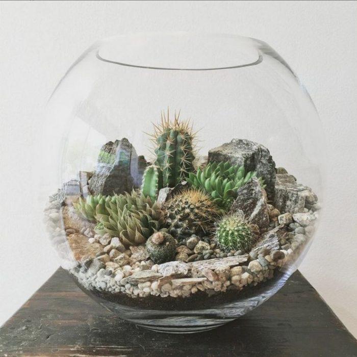 pecera con cactus para hacer un terrario