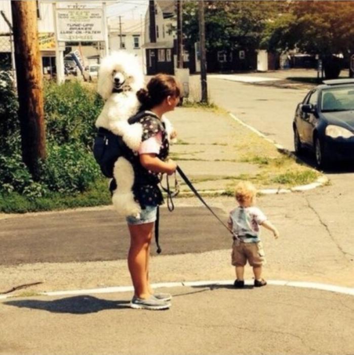 Madre paseando con su hijo y su mascota de manera equivocada