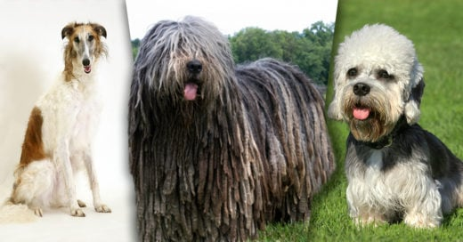 Cover Las 10 razas de perro más exóticas del mundo