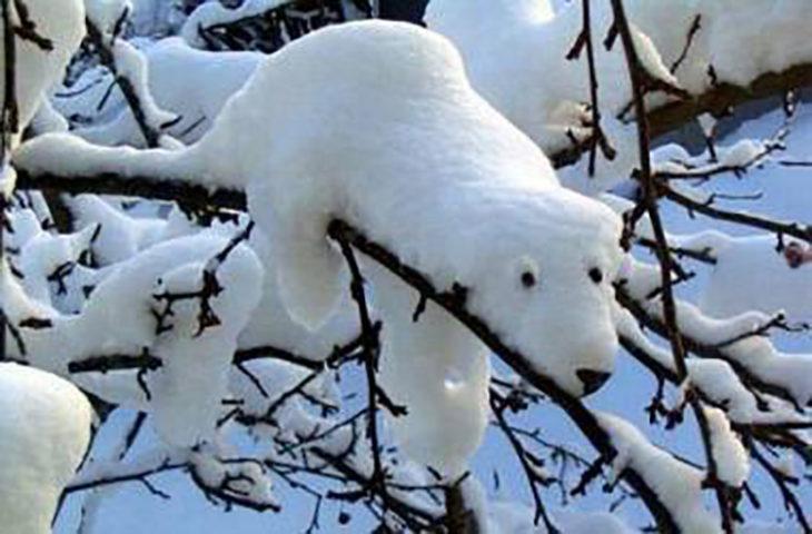 nieve con forma de oso polar
