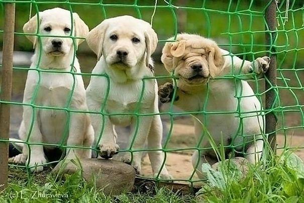 cachorro atorado en la red