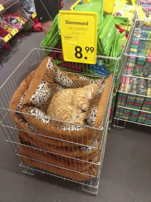 Gato dormido en cama para gatos que se vende en tienda