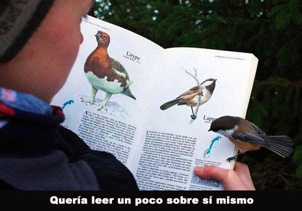 Pájaro en libro de pájaros