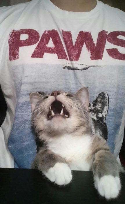 Paws gato