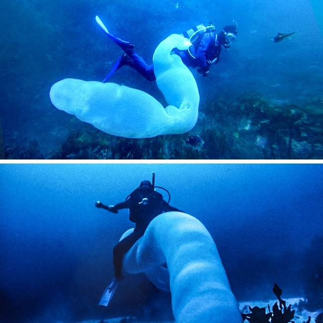 gusano mar