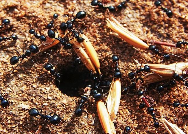 Hormigas personas
