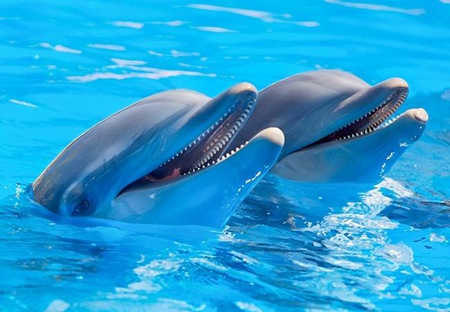 delfines platicando