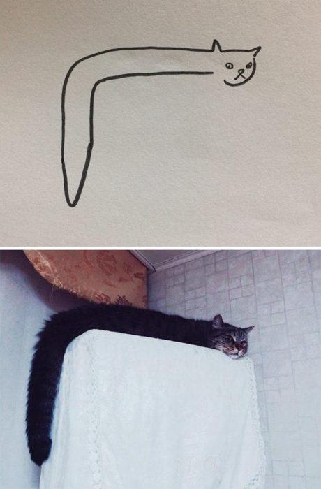 Dibujos realistas gato - acostado